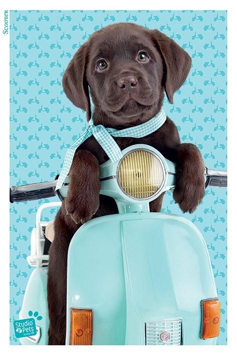 Plakát Studio Pets - Scooter
