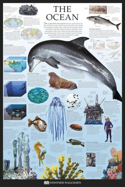 Plakát The ocean