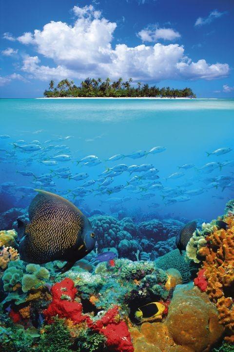 Plakát Tropical underwater