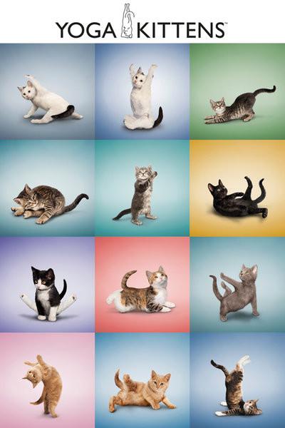 Plakát Yoga - koťátka