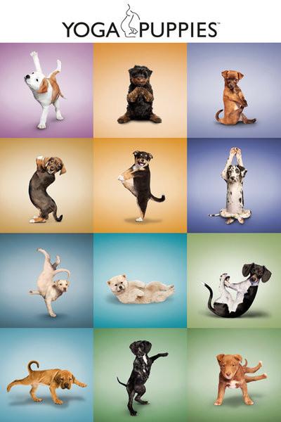 Plakát Yoga - štěňátka