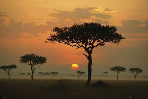 Poster African plains