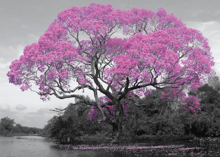 Poster Baum - Blossom