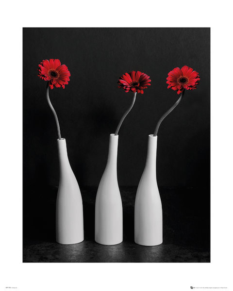 Poster Blumen - Gerberas