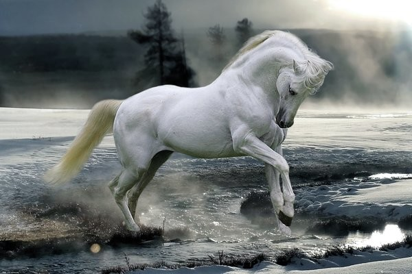 Poster  Bob Langrish - Horse Snow