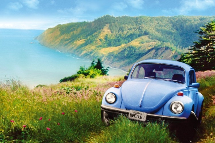 Poster California - beetle