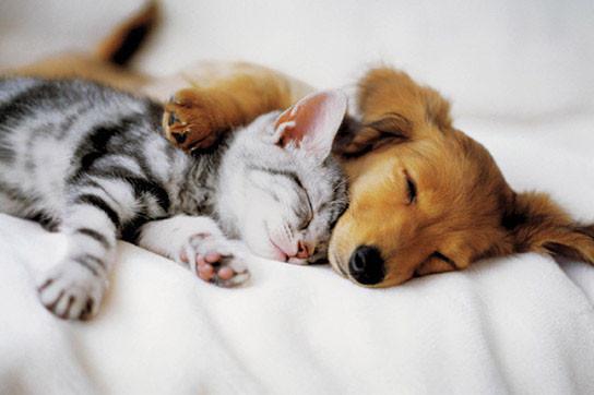 Poster Cuddles