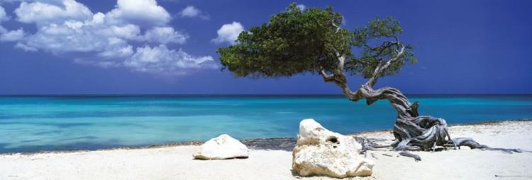 Divi divi tree - Tom Mackie poster, Immagini, Foto