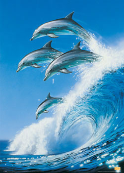 Poster Dolphins - born free