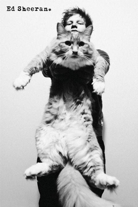 Ed Sheeran - cat Poster