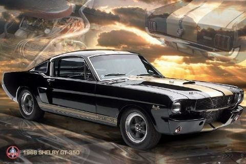 Póster Ford Shelby - Mustang 66 gt350