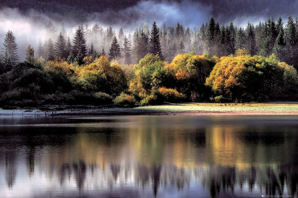 Forest - autumn lights Poster