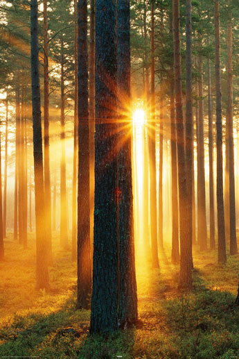 Forest sunbeams poster, Immagini, Foto