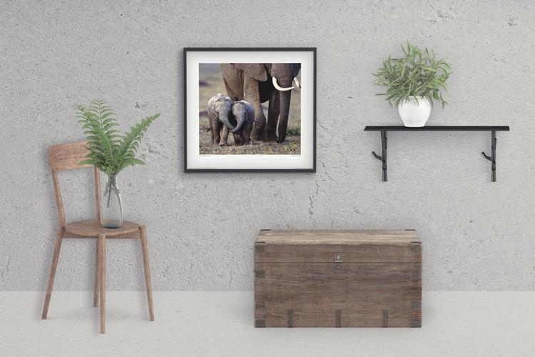 Olifant - Friends Kunstdruk
