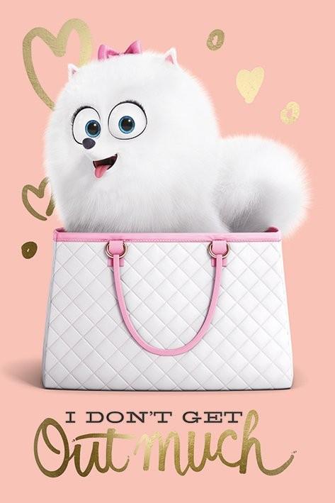 Poster Quadro Pets Vita Da Animali I Dont Get Out Much Su