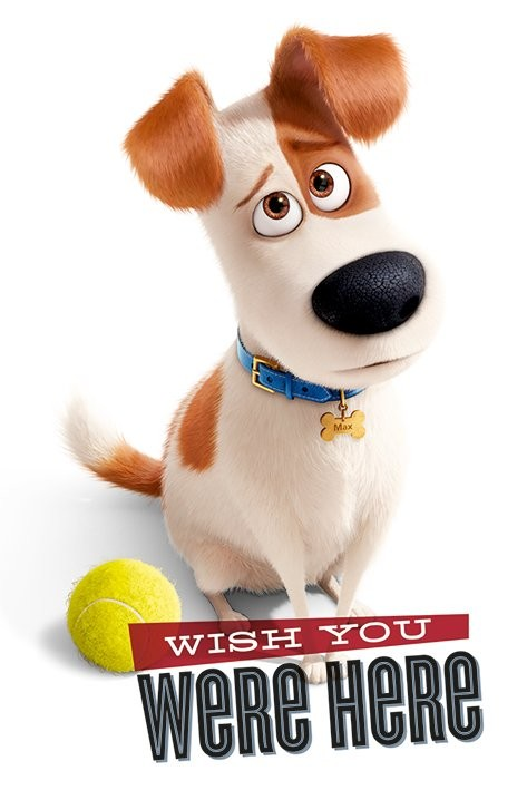 Poster Quadro Pets Vita Da Animali Wish You Were Here Su