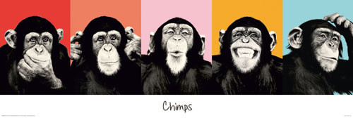 THE CHIMP - compilation Poster / Kunst Poster
