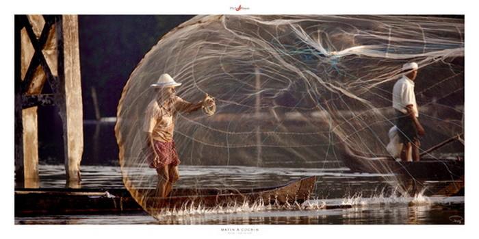 Matin á Cochin Reproducere