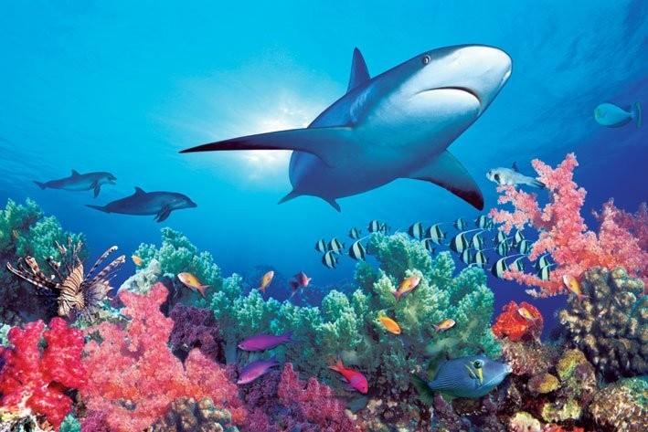 ocean life poster și tablou europosters ro