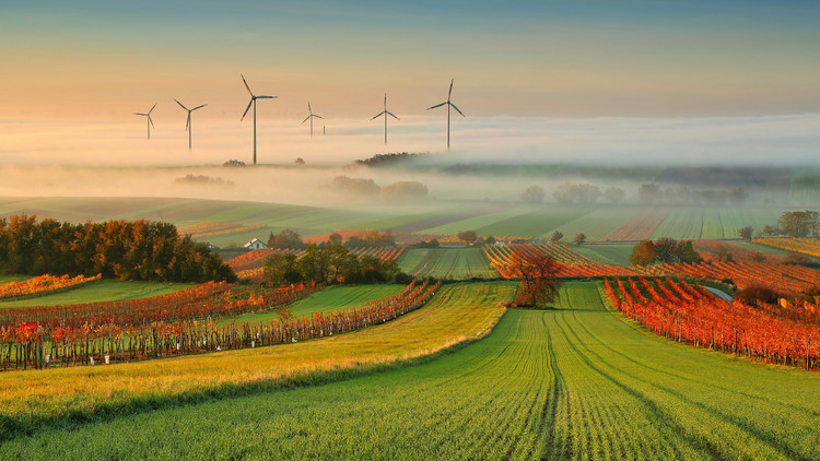 Autumn Atmosphere in Vineyards Poster Mural XXL