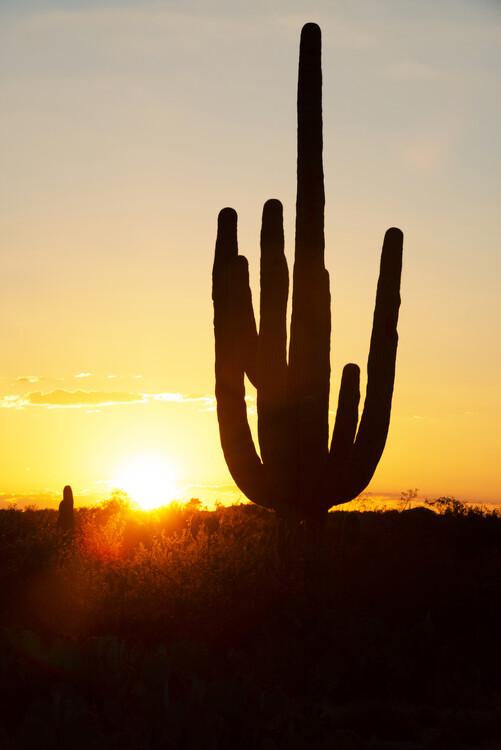 Cacti Cactus Collection - Cactus Sunrise Poster Mural XXL