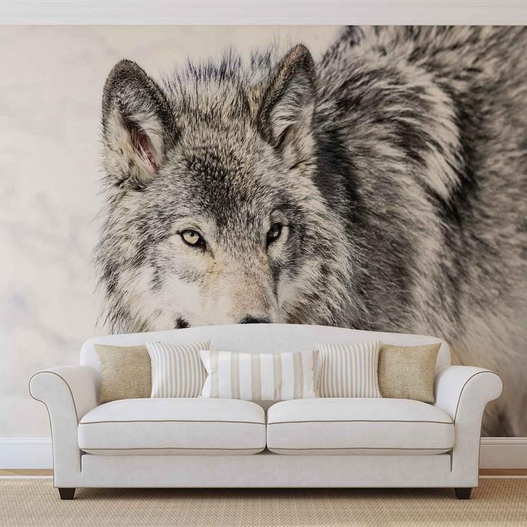 loup animal poster mural papier peint acheter le sur. Black Bedroom Furniture Sets. Home Design Ideas