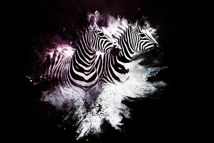 The Zebras Poster Mural XXL