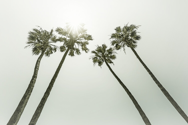 Vintage palm trees in the sun Poster Mural XXL