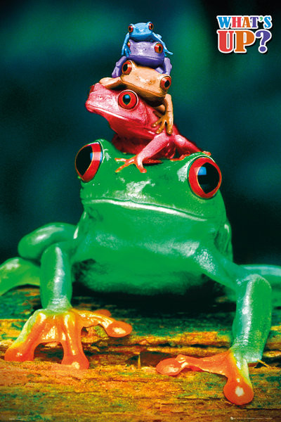 Poster  5 frogs