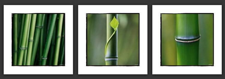 Bambous Kunstdruck