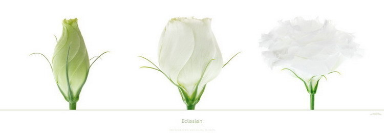 Eclosion Poster
