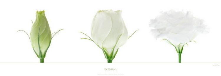 Eclosion Kunstdruck