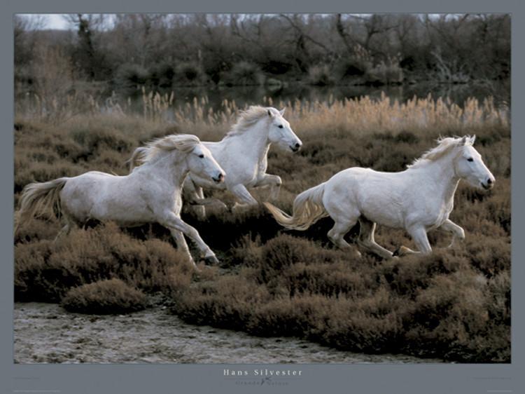 Equus 3 - Camargue - France Kunstdruck