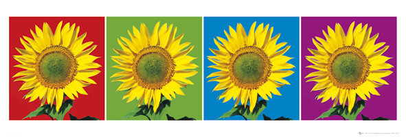 Flowers – four sunflowers poster