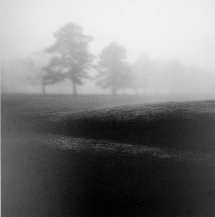Fog Tree Study II Kunstdruck