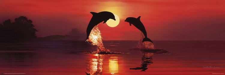 Poster Lassen - dolphin dawn