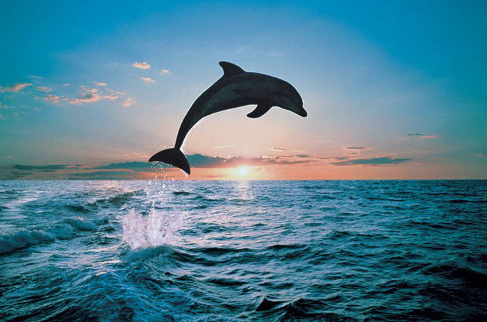 Poster Leap of freedom - dolphin