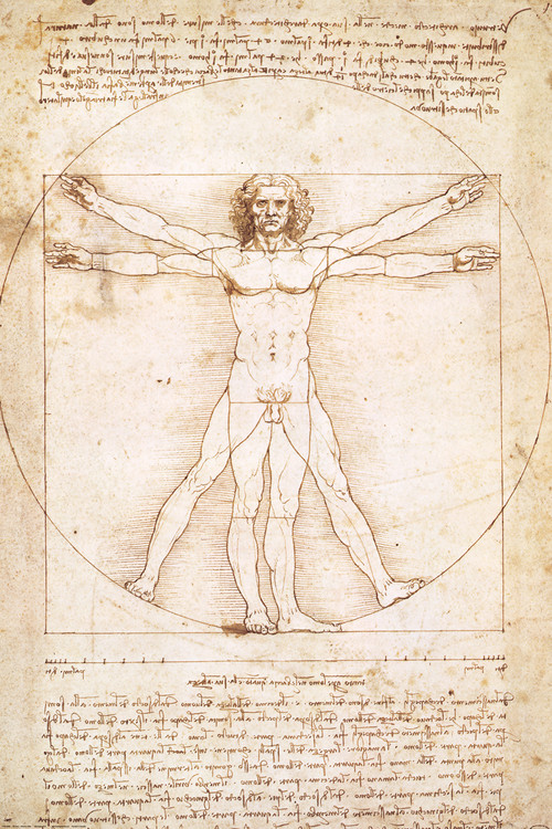 Leondardo da Vinci - vitruvian man Poster - EuroPosters