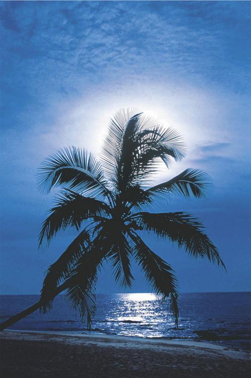 Poster Moonlight sonata