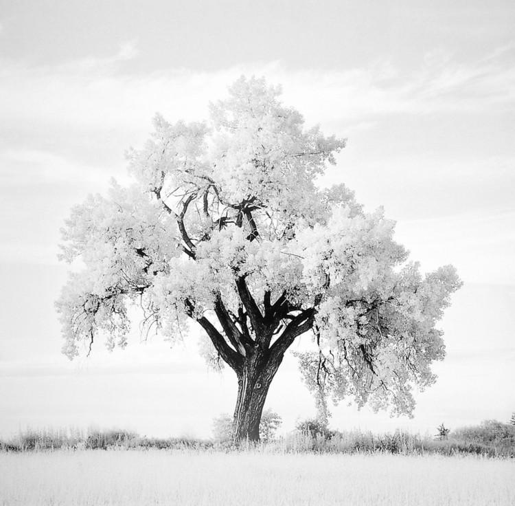 Oak Tree Kunstdruck