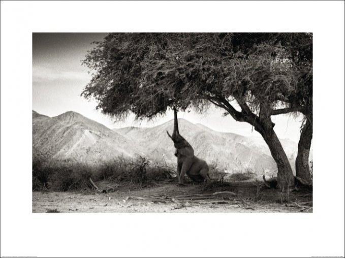 Philippe-Alexandre Chevallier - Elefant Kunstdruck