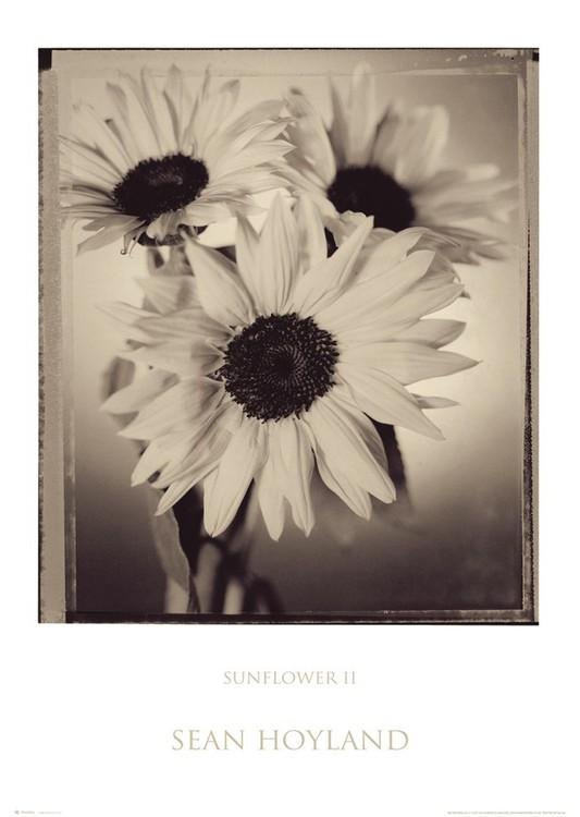 Poster Sunflower 2