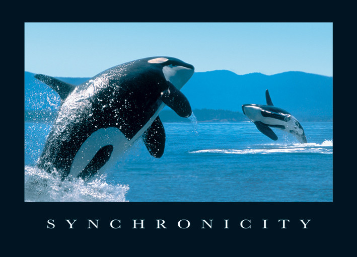 Poster Synchronicity - orcas
