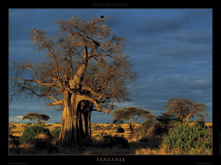Tanzania Kunstdruck