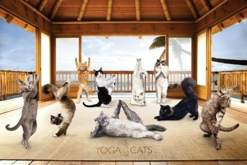 Poster Yoga cats - hut