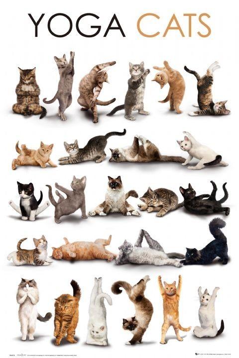 Poster Yoga cats