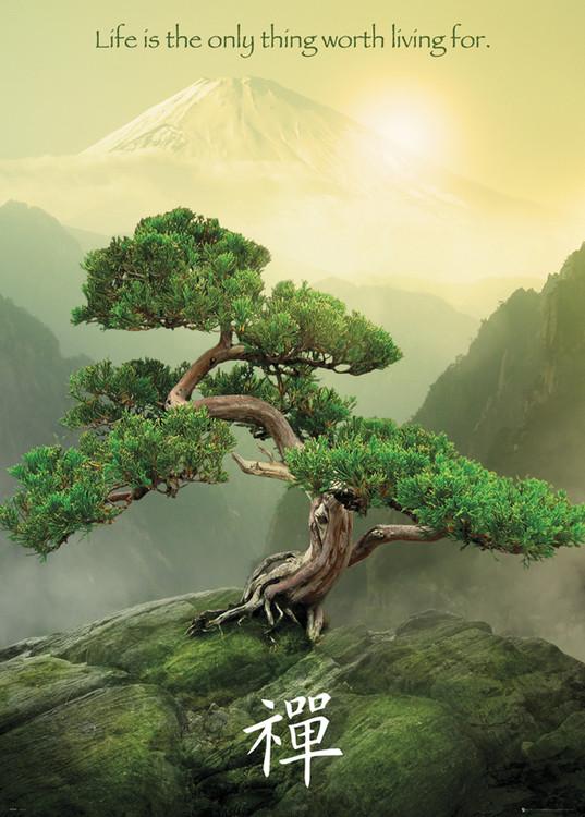 Poster Zen träd