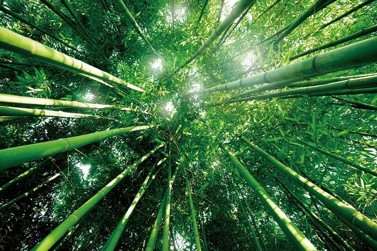 Bamboo Forest Print på glas