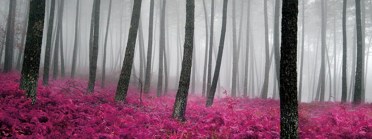 Pink World - Pink Forest Print på glas