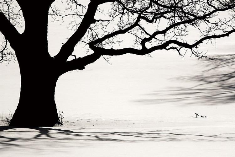 Tree - Black and White Print på glas